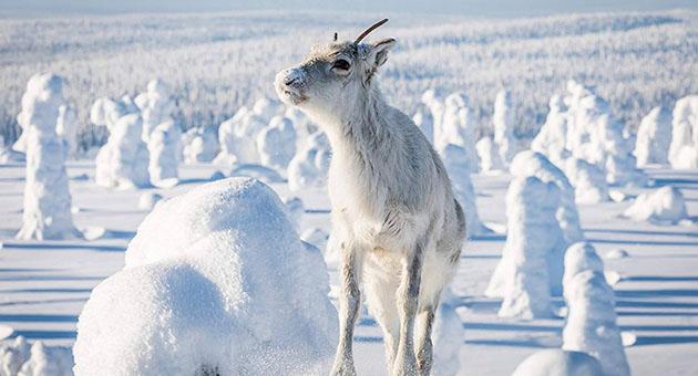 Ailos reise – et nordnorsk eventyr